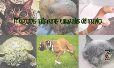 Mascotas raras en el mundo, Animales extraños y poco usuales