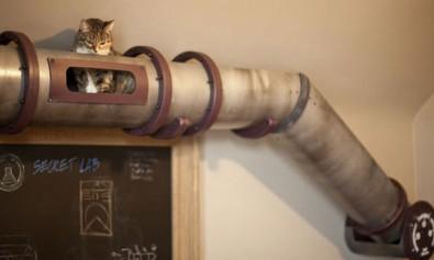 zigmaz-tuberia para gatos 1
