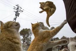 Gatos Dia Internacional