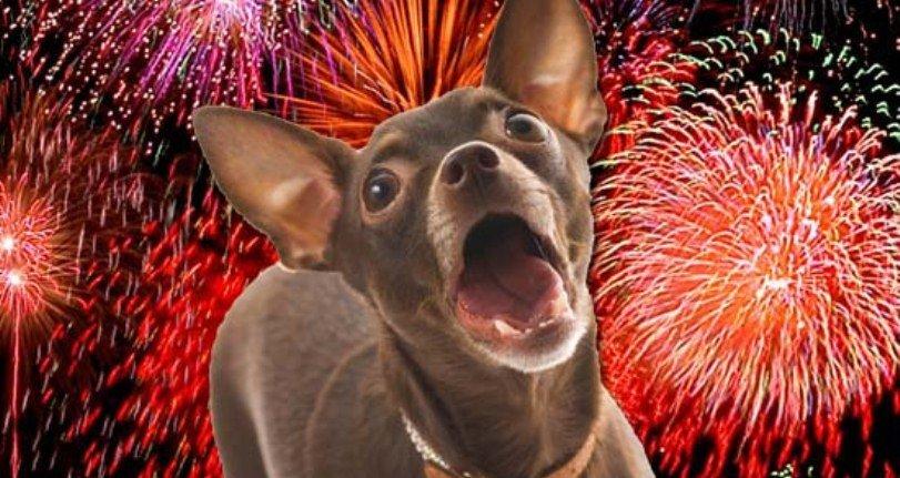 22-01-2013Los-fuegos-artificiales-y-tu-p