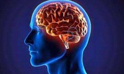 zigmaz-cerebro