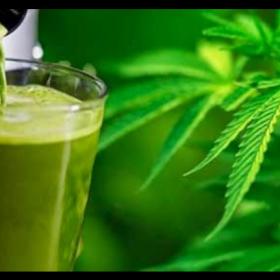 (Receta) Cómo hacer un Smoothie de Cannabis medicinal